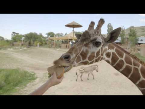 How to Give Zoo Animals Medicine thumbnail