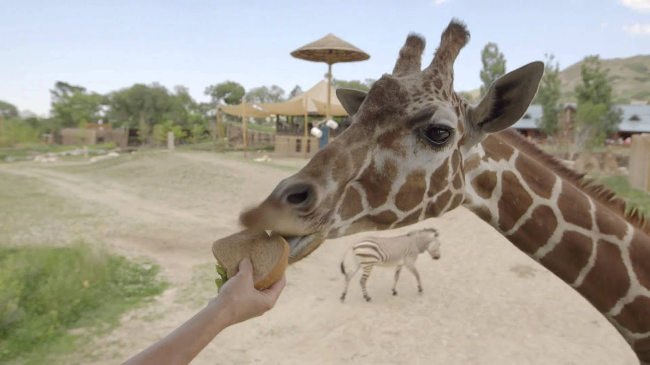 Preview image for How to Give Zoo Animals Medicine video