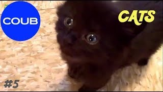 BEST COUB CATS#5, Лучшие котики Coub#5