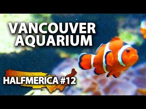 finding-nemo-at-the-vancouver-aquarium----#halfmerica