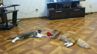 кошки-мышки. пушистики. котики. кот. кошка. смешные коты