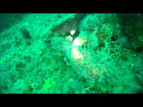 Dive #3 Fernandina Beach, FL / St. Marys, GA (7/7/12)