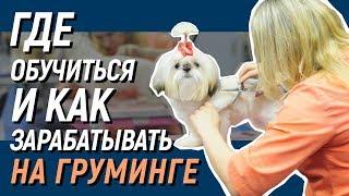 Вебинар о Школе груминга ZooProfi. Обучение стрижке собак.