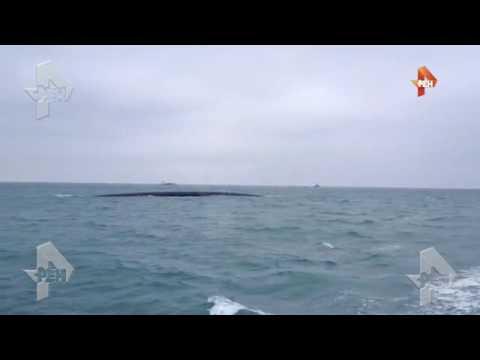 Видео с места крушения Ту 154 под Сочи