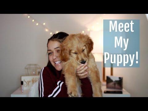 I GOT A PUPPY!
