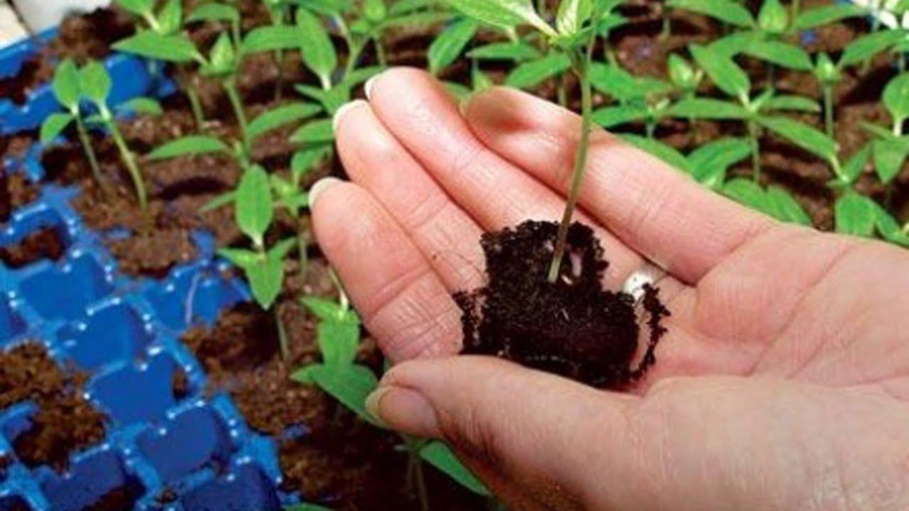 Картинки по запросу Заготовка почвы для рассады