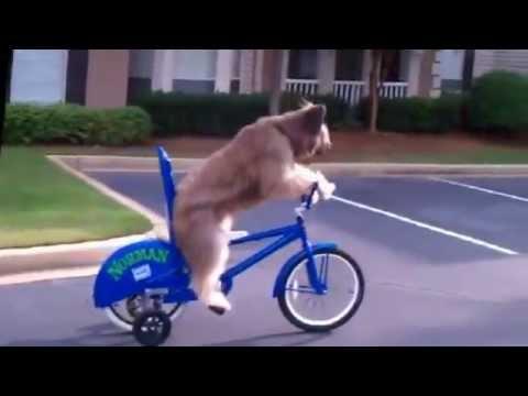 Самые смешные собаки! - YouTube