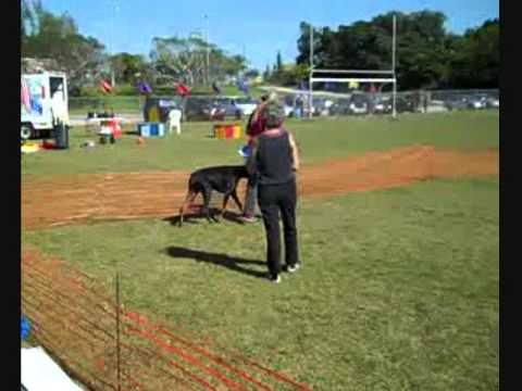 Board-And-Train Dog Training Fort Lauderdale