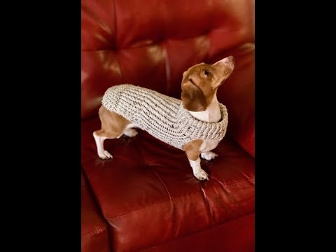 Loom Knit Dog Sweater YouTube Impressive Crochet Dog Sweater Pattern Easy
