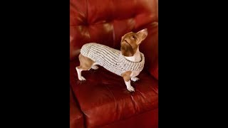 Loom Knit Dog Sweater