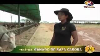 Agrovisión: Raza Carora 4ta Parte