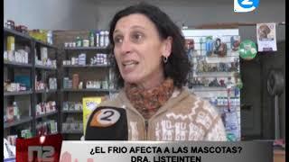 EL FRIO Y LAS MASCOTAS