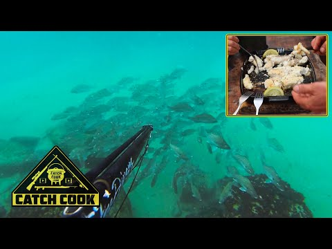Spearfishing South Africa's Pristine Wild Coast (catch Cook)