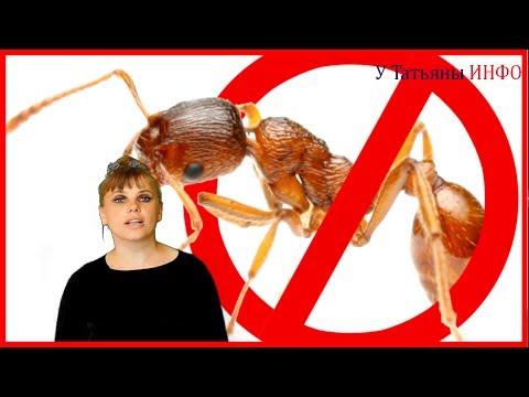 Как избавиться от муравьев 10 СПОСОБОВ!
