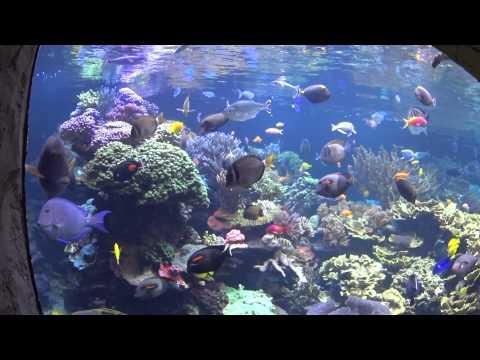 Long Island Aquarium and Exhibition Center @ Riverhead, NY - Part One