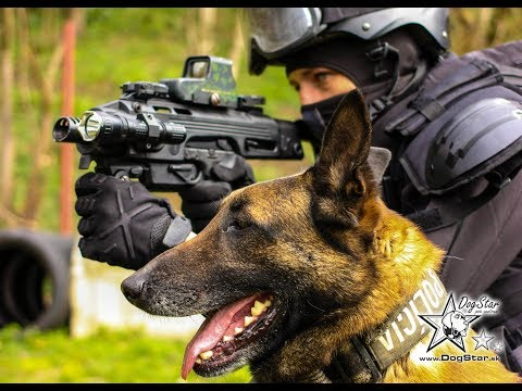 K9 Swat Action video - K9 Training Slovakia