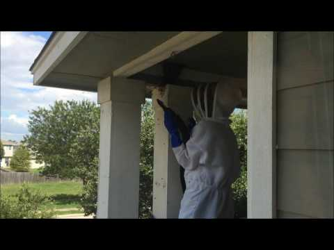 Giant Beehive Removed From Balcony - Round Rock TX
