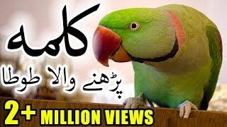 Parrot Reciting Kalma   Subhanallah   Faisal JavedTV