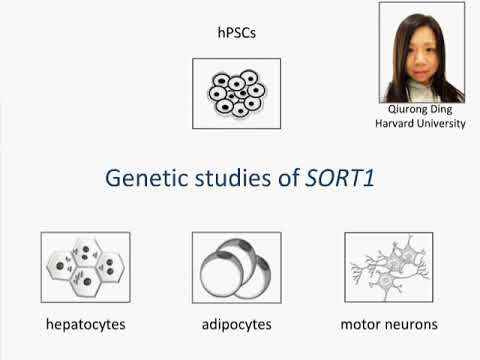 Genome Editing To Generate Human Cellular Disease Models
