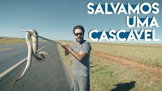 CASACAVEL NA ESTRADA | Rock in Bio #21