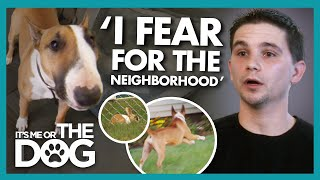 PANIC as Biting Dog Escapes Accidentally Let loose During Training! | It's Me or The Dog