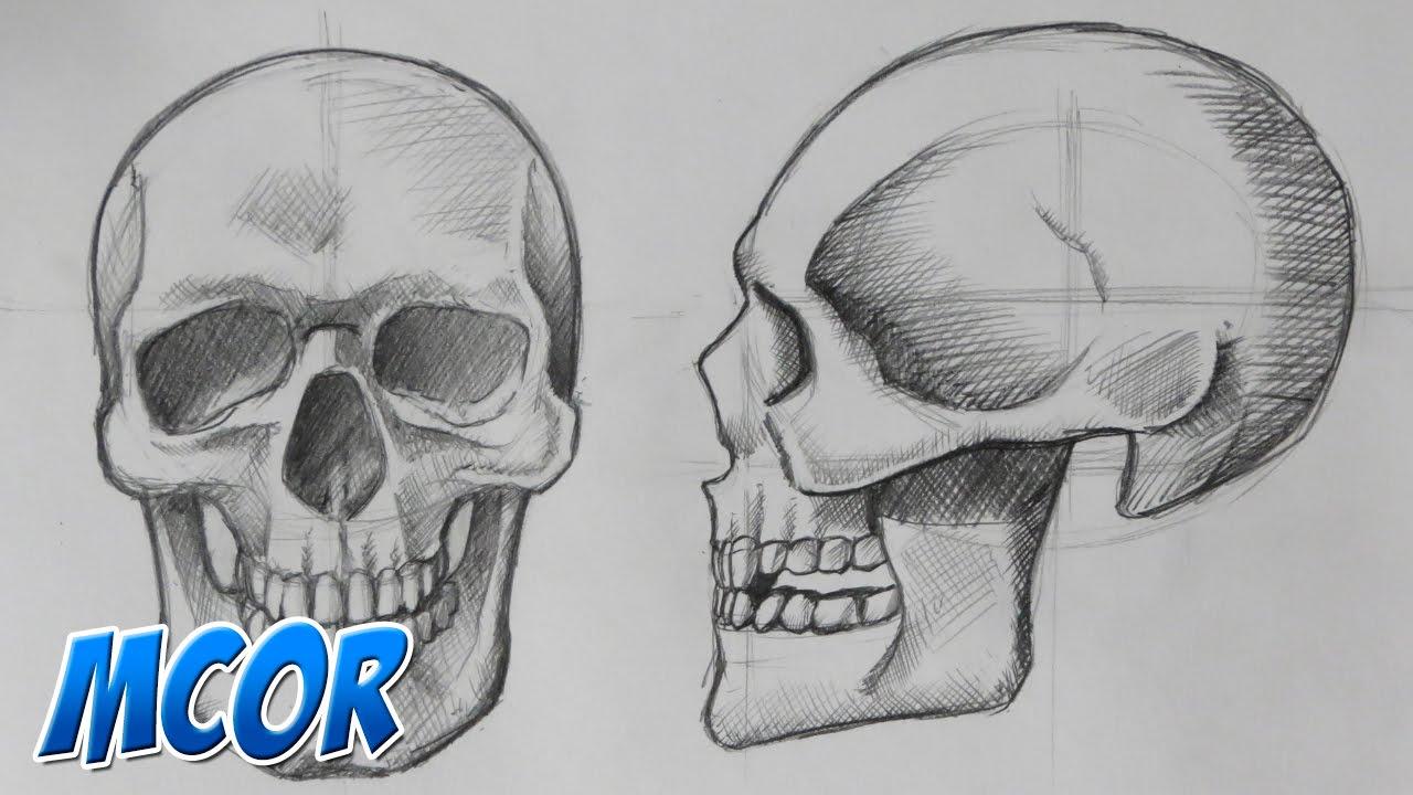 Como Dibujar el Craneo de Frente y Perfil | Anatomia - YouTube