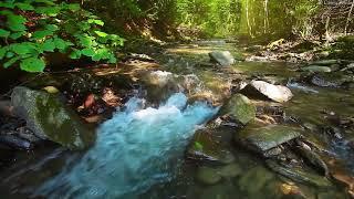 Música Relaxante Flauta Indígena e Sons da Natureza - Acalmar a Mente e Relaxar