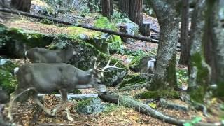 USA trip,California,Yosemite National Park,(Impro Ceļojumi)