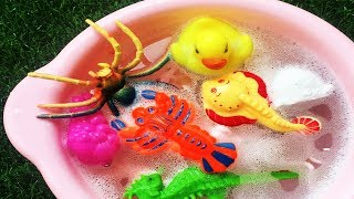 Learn Colors With Animals And Animals Names In Water Foam - Colors Animals Videos For Kids