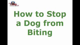How to Stop a Dog from Biting | Top Tips