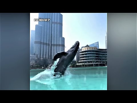 Whale In Dubai Mall Fountain Area Video Shared By Emaar