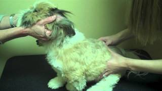 Animal Chiropractic For Allergies And Yeast Overgrowth