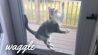 Pets Who Are Stuck | Funny Pet Fail Compilation