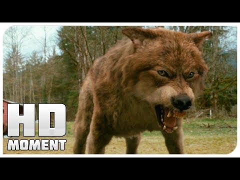 Белла узнает что Джейкоб волк - Сумерки. Сага. Новолуние (2009) - Момент из фильма