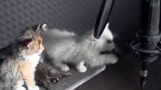 Котята поют песню