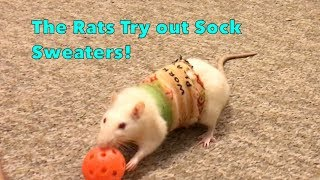 The Rats Try Out Sock Sweaters