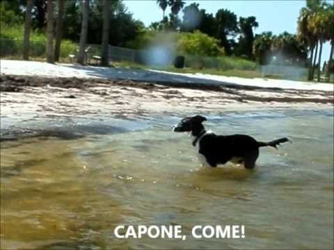 Picnic Island Dog Beach Tampa Fl Part Ii