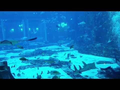 Amazing Dubai Aquarium | Underwater Zoo | Dubai Mall | Diver Cleaning Tank With Sharks