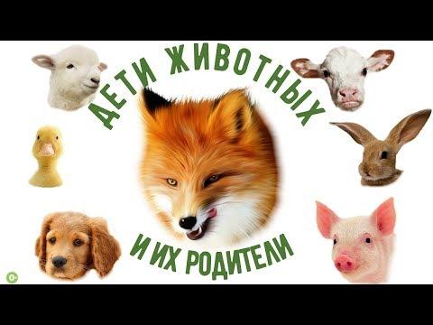 Животные и их детеныши. Названия животных и их детенышей.