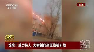 [今日亚洲]速览 惊险!威力惊人 大树倒向高压线被引燃| CCTV中文国际