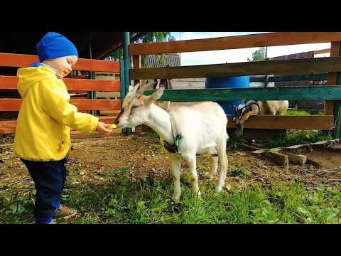 Малыш кормит животных на ФЕРМЕ и СОННЫЙ ПАПА