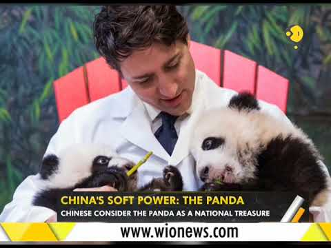 WION Gravitas: Panda is China's biggest soft power abroad