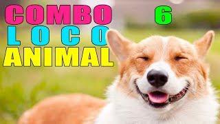 COMBO LOCO ANIMAL 6