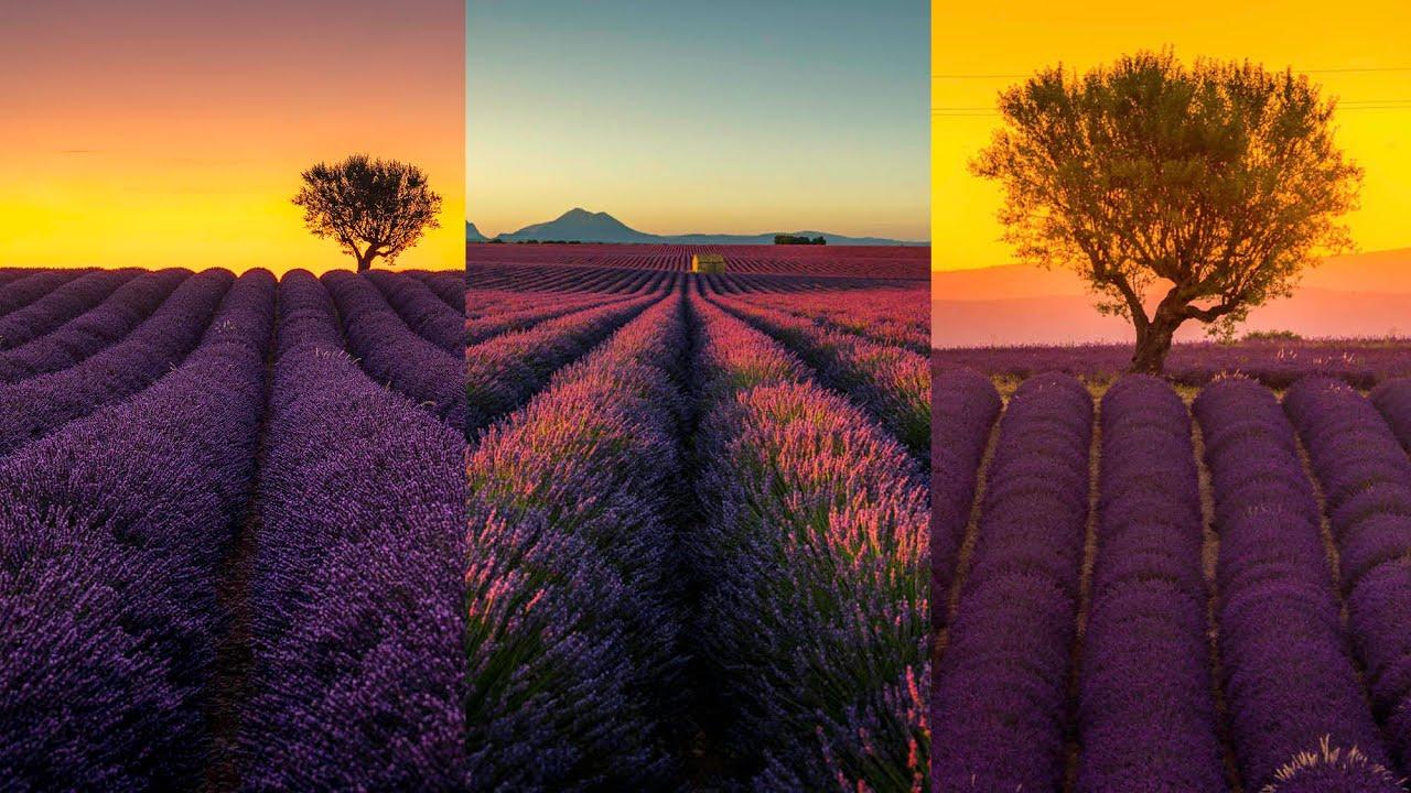 Les BONNES Techniques de COMPOSITION pour photographier les CHAMPS DE LAVANDE en Provence!