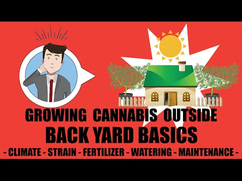 How To Grow Weed Outdoors - Outside Cannabis Backyard Grow School Basics