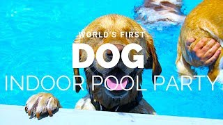 World's First Indoor Dog Pool Club Party 🐶