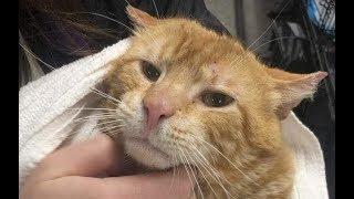 Бродячий кот боялся людей и отказывался от еды, но встреча с котятами изменила его!