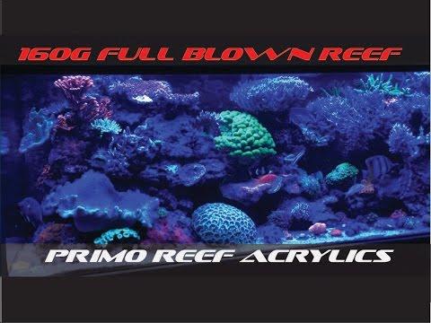 full-blown-reef-(160g)