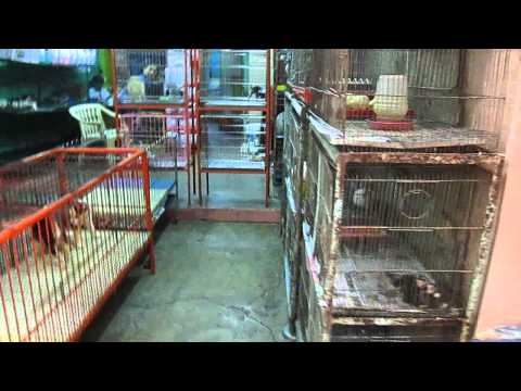 cartimar pets manila رحلتي لسوق الطيور في مانيلا الفلبين كارتيمار