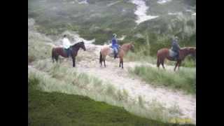 Reiterferien im Ferienhaus auf der Ferieninsel Sylt der norfriesischen Insel in der Nordsee